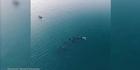 Watch: Orca visit wows raglan locals