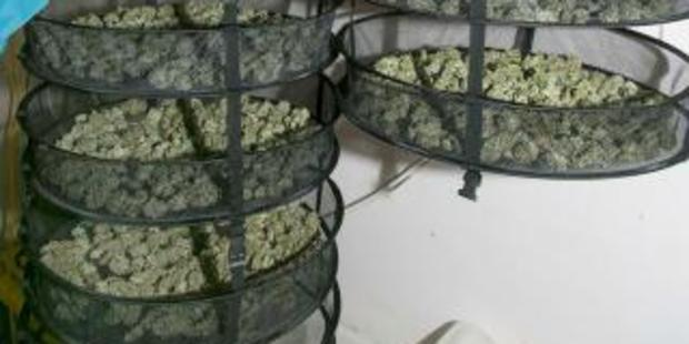 Timaru Police found the sophisticated hydroponic cannabis growing operation at a Temuka property. Photo / NZ Police