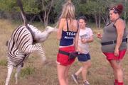 Tegan Martin at the moment she meets the wrong end of the zebra. Photo/Channel 10