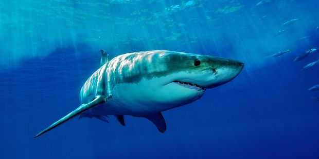 Swimmers and pet owners are being warned stay away from a south Sydney beach after a dog was taken by a shark.