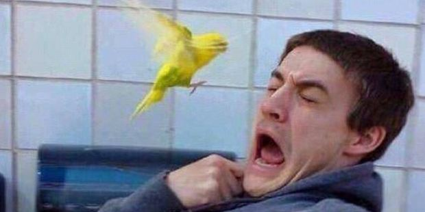 A rare instance in which a dainty but bold-looking bird looks intent on snatching the nose right off this man's face - and he's suitably distressed. Photo / Imgur