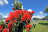 Parks Week is March 4-12 and city council has planned activities celebrating Tauranga's parks and reserves. Photo/file