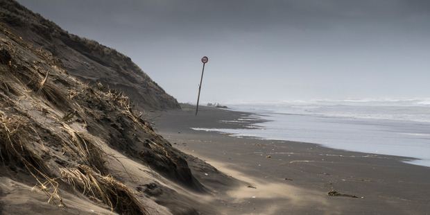 A body has been found at Muriwai beach in Auckland.