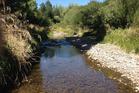 Woodville's Mangapapa Stream has won an award for being the second most improved waterway for dissolved inorganic nitrogen at the New Zealand River awards.