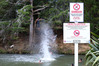 Warnings about  water quality at  Whangarei Falls in January 2015. NRC now says  Northland swimming spots have better water quality than the picture painted by central Government. Photo / Michael Cunningham