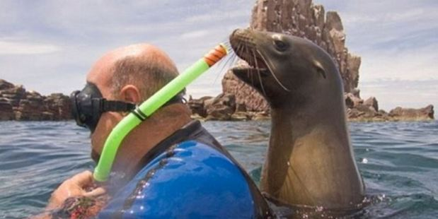 This snorkeller doesn't appear to notice but he's got a very curious seal examining him from behind. Photo / Imgur