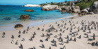 Boulders Beach, Cape Town. Photo / 123RF