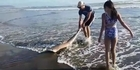 Watch: Watch: Man saves beached shark on Muriwai beach