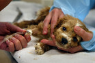 A puppy with parvo requires intensive, expensive treatment and still may not survive.