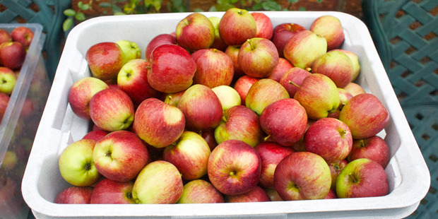 Scales' overall apple and pear exports were maintained at 3.55 million tray carton equivalents. Photo / File