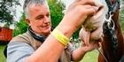 Watch: HOY vet on horse health
