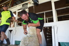 Josh Cozens shearing. Photo/Supplied