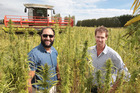 Kanapu Hemp Food Ltd director Isaac Beach, left, and co-founder Simon White are delighted with the results of this season's commercial harvest. Photo/Duncan Brown