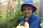 Thornton Smart, 9, likes watching the butterflies' life cycle.