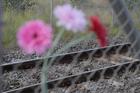 Flowers near the scene of the latest railway tragedy in Ngāruawāhia. Photo / Michael Craig