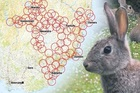 These overlapping circles indicate the expected distance the rabbit virus RHDV1 K5 will spread in Otago over the next two months. Photo / Otago Regional Council