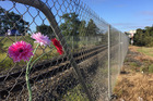 Flowers at the scene of where an 11-year-old was killed by a train in Ngaruawahia on Sunday. Photo / Belinda Feek