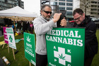 Parliament is considering a law change which will decriminalise medical cannabis for terminally ill patients. Photo /  Jason Oxenham
