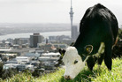 A recent report shows both urban and rural practices have affected New Zealand's soil. Photo / Chris Skelton