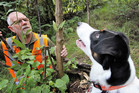 Biosecurity dog Rusty spotting a batwing passionflower vine at Whangaroa for his master, John Taylor.