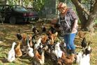 Victoria Bonham, of Galloway, near Alexandra, with her flock of assorted ducks and chickens. Photo / Yvonne O'Hara