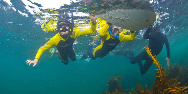 A snorkelling event will be held next year off Kapiti Island. Photo: Darryl Torckler