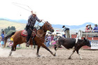 Rodeo organisers have defended their concern for animal welfare. Photo / Duncan Brown