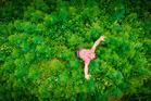 Tom Welch in his crop of hemp. Photo / Alexander Robertson