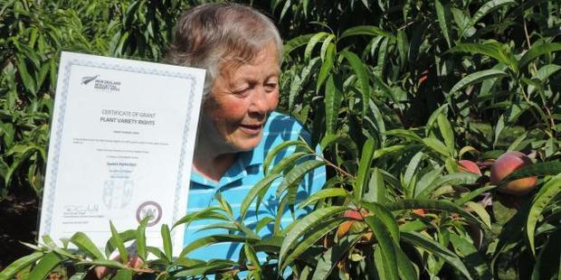 "Georgetown orchardist Helen Brookes, holding the certificate acknowledging plant variety rights, inspects this year's crop of ""Sweet Perfection'' peaches. Photo / Sally Brooker"