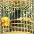 A song bird welcoming visitors at the Big Wild Goose Pagoda, Xian, China. Photo / Jim Eagles