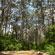 The majestic karri trees of Boranup Forest. Photo / Eveline Jenkin