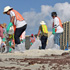 Oil cleanup workers scour the beach for tar balls in Orange Beach, Alabama. Photo / AP