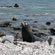 A seal on the coast near Kaikoura. Photo / Jim Eagles