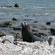 A seal on the coast near Kaikoura. Photo / Jim Eagles