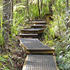 Montana Heritage Trail, Waitakere Ranges Regional Park. Photo / Jim Eagles
