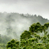 Mist in the Waitakeres. Photo / Doug Sherring