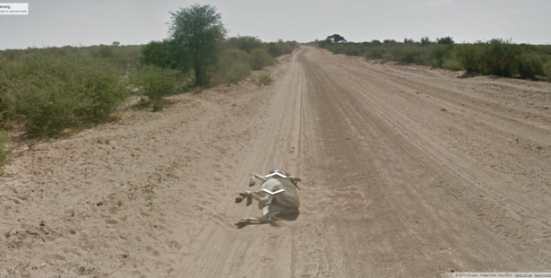 The image of the donkey lying on the road in Botswana. Photo /Google Street View