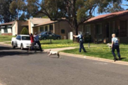 A photo posted to Facebook reportedly taken just before a man was shot by police in Cowra.  Photo / Facebook