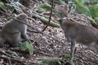 The deer and the monkey face each other after one of their meetings. Photo/YouTube