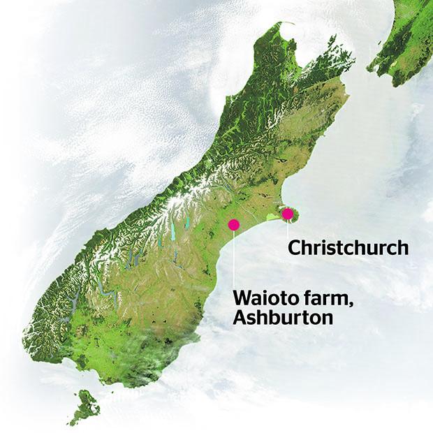 500 cows disappear from Ashburton farm
