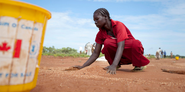 A woman gathers sorghum spilled by a broken bag after a World Food Programme air drop of food supplies. Photo / AP