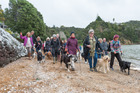 About 60 dogs and owners gathered on Opua Beach in protest at a draft bylaw which would make it one of only two beaches in the Bay of Islands where dogs will be allowed off lead. PHOTO / RUTH LAWTON