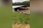 Footage from Chris Pemberton's property in Millers Flat, two minutes after flash floods caused a lot of damage to his farm. He's never seen anything like it. Credit: Chris Pemberton