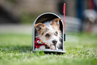 The Parson Jack Russel terrier Jo-Jo closes an American postbox as he sits inside during the 'Dog And Cat 2018' fair in Dortmund, Germany, Thursday, May 3, 2018. (Guido Kirchner/dpa via AP)