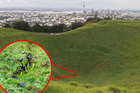 An onzO bike sits at the bottom of the crater on Mt Eden. Photo / Michael Craig