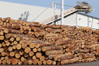 Logs piled up at Napier Port. China and India require imported timber to be treated with methyl bromide. Photo / Duncan Brown.