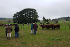 There was strong bidding at the Otapawa Poll Hereford Stud's 31st Annual Sale.