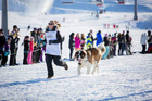 Charlotte Newbold and her dog compete in the Monteith's Dog Derby and Barking at the Cardrona Alpine Resort as part of the Queenstown Winter Festival this week. Photo / Still Vision