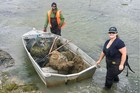 Shane Gilmer and Anna Madarasz-Smith work to remove invasive tubeworm from the Ahuriri Estuary late last year.