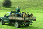 Dogs on a ute would need to be restrained if the vehicle was on a public road under new rules.